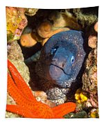 Moray And Starfish Tapestry