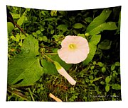 Morning Glory Glow Tapestry
