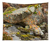 Moss And Lichens In The Scottish Highlands Tapestry