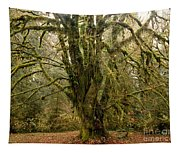 Moss-covered Bigleaf Maple  Tapestry