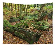 Moss Covered Logs On The Forest Floor Tapestry