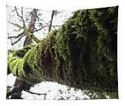 Moss Covered Tree Tapestry