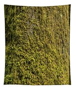 Moss Covered Tree Olympic National Park Tapestry