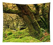 Moss Covered Trees In A Forest Tapestry