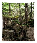 Mossy Rocks In The Forest Tapestry