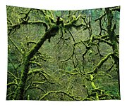 Mossy Trees Leafless In The Winter Tapestry