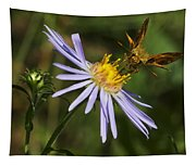 Moth Feeding On Aster Dragon Tapestry