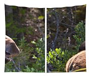 Mother And Baby Moose Tapestry
