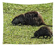 Mother And Child - Coypu - Nutria Tapestry