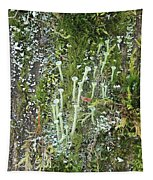 Mountain Moss Lichens And Fungi Tapestry