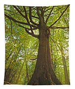 Mystical Forest Tree Tapestry