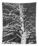 Naked And Barren Tapestry
