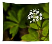 Nature Celebrates Spring With A Burst Of Botanical Fireworks Tapestry