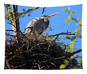 Nesting Great Blue Heron Tapestry