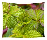 New Black Berry Leaves Tapestry