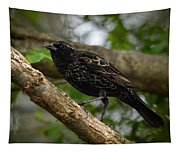 Red Winged Blackbird - New Heights - 06.04.2014 Tapestry