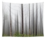 New Jersey Pine Barrens Tapestry