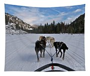 Riding Through The Colorado Snow On A Husky Pulled Sled Tapestry