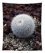 New Photographic Art Print For Sale White Ball Cactus Tapestry