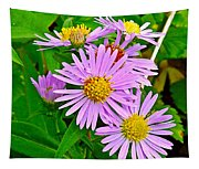 New York Asters In Flower's Cove-newfoundland Tapestry