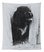 Newfoundland Puppy Tapestry