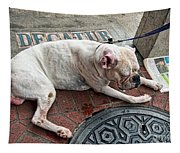Newsworthy Dog In French Quarter Tapestry