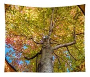 Through The Roof Tapestry