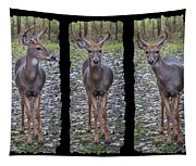 Curious Yearling Deer Tapestry