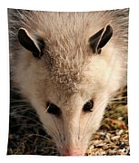 North American Opossum In Winter Tapestry