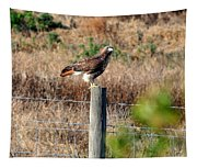 Northern Harrier Tapestry