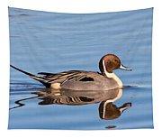 Northern Pintail Drake Tapestry