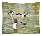 Northern Pintail Ducks  Tapestry