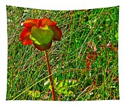 Northern Pitcher Plant In French Mountain Bog In Cape Breton Highlands-nova Scotia  Tapestry