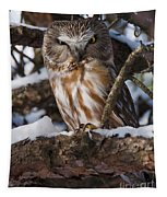 Northern Saw-whet Owl.. Tapestry