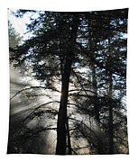 Northwoods Morning Tapestry