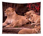 Nurturing Tapestry