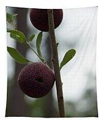 Oak Galls Tapestry