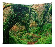 Oak Trees In A Forest, Wistmans Wood Tapestry