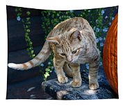 October Kitten #2 Tapestry