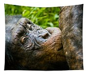Old Chimp Tapestry