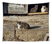 Old Knox Church Cats #2 Tapestry