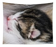 One Day Old Kitten Breastfeeding Tapestry