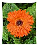 Orange Gerber Daisy 2 Tapestry