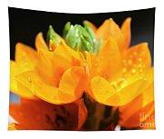 Orange Star Tapestry