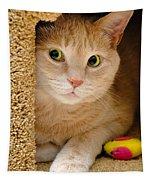 Orange Tabby Cat In Cat Condo Tapestry