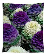 Ornamental Cabbage Tapestry