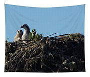 Osprey Chicks In Nest Tapestry