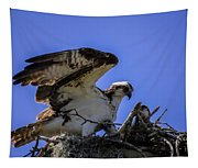 Osprey In The Nest Tapestry