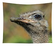 Ostrich 4 Tapestry