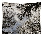 Overhead Trees In Exmoor, United Kingdom Tapestry
